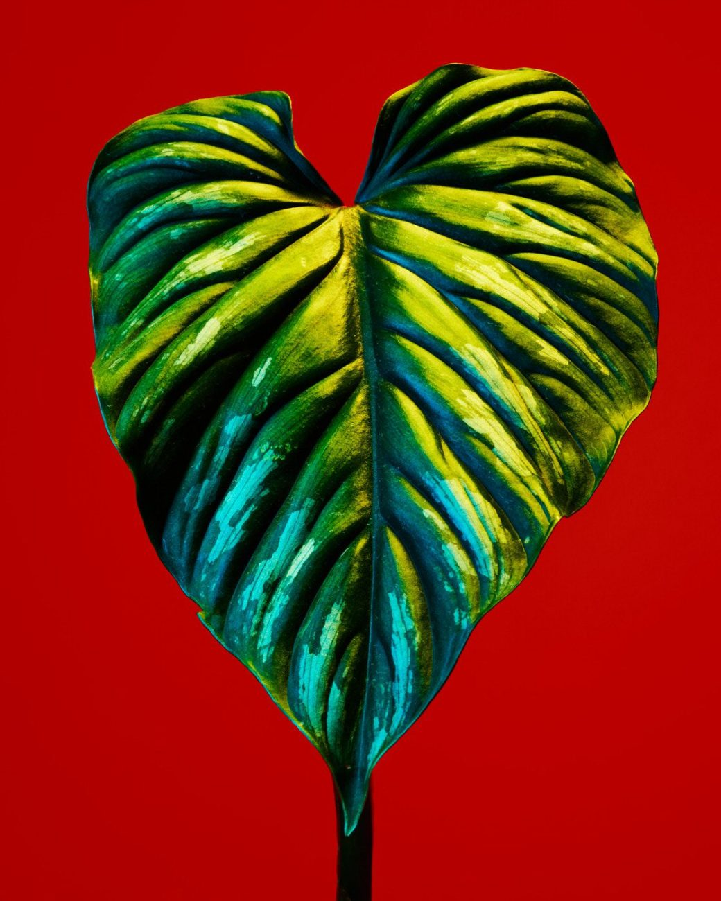 unique photography of philodendron